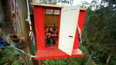 Endangered: Hannah Patchett and others have been living in the Toolangi tree house to raise awareness about the threat of logging to the Leadbeater's possum.