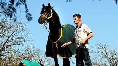Champion horse So You Think enjoys the sunshine and a raging favouritism for tomorrow's Cox Plate.