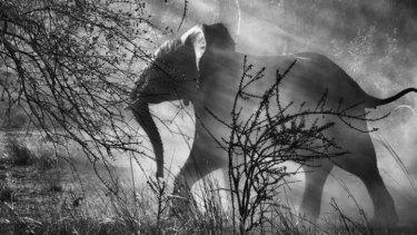 Sebastiao Salgado's images have taken him to every corner of the world.