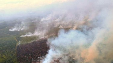 Under investigation ... burning in the Tripa peat forests in Aceh, northern Sumatra, to make way for palm oil plantations is endangering orang-utans.