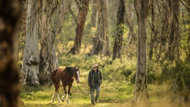 "Cattleman Charlie Lovick gets ""Clyde"" ready for work in Victoria's Alpine National Park."