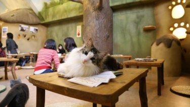 Cat cafes have popped up around the world, including this one in Tokyo.