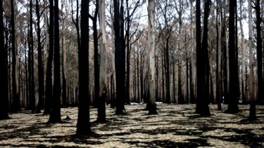 Kinglake, one month after the fires on Black Saturday.