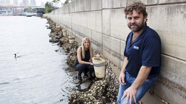 Stone zone: Rebecca Morris and Anthony Luck install a pot along the harbour sea walls.