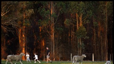 Timber plantations form a stark backdrop as Shane Foster plays with his children Thomas and Claire on his farm in Casterton.