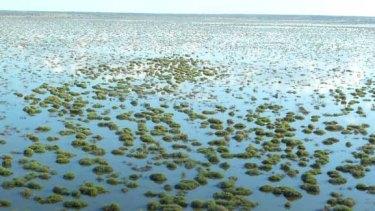 The flooded Cuttaburra basin in NSW.