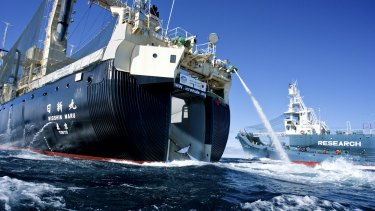 A Japanese harpoon ship offloads a whale to the larger Nisshin Maru abattoir ship in 2013.