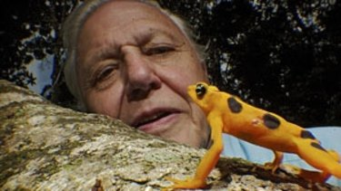 David Attenborough with some of the reptiles in Life In Cold Blood.