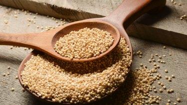 Sorghum grains.