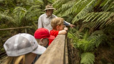 Nature buzz: Enjoy the flora and fauna at Otway Fly Treetop Adventures in Weeaproinah.