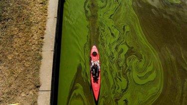 Toxic algae in Lake Burley Griffin earlier in the year ... Kayaker Sarra Pitman paddles under the Kings Avenue Bridge.