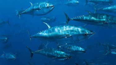 Just 5.6 per cent of Australia's biodiverse continental shelf waters will be protected.