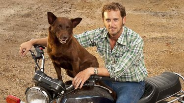 A dog of a film - but in a good way: Drifter John (Josh Lucas) strikes up a friendship with a beloved stray dog (Koko) in the wonderful new Australian film <i>Red Dog</i>.