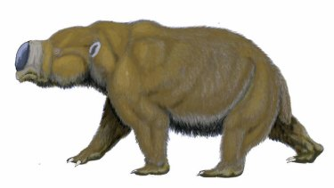 Weighed about a tonne: An artist's impression of the diprotodontid, described as a giant wombat.
