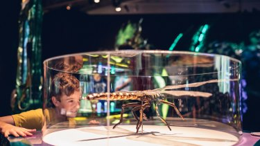 A young boy marvels at a model of a griffinfly, an ancient dragonfly relative with a 70-centimetre wingspan.