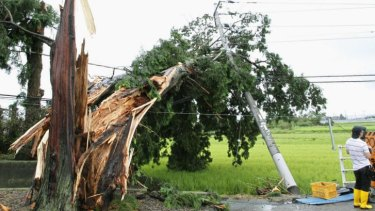 Strong wind caused by Typhoon Halong caused this tree to fall and damage this power pole in Minobu town.