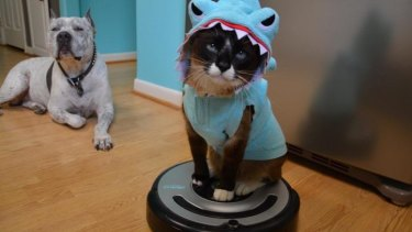 Not a fan of cats? <i>Dogs Make You Laugh Out Loud</i> offers something for dog lovers.