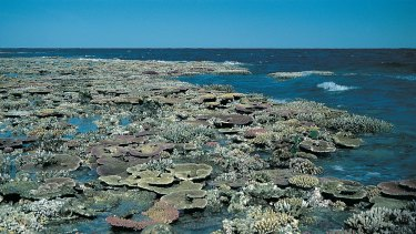 A reef flat exposed at low tide on the Great Barrier Reef.