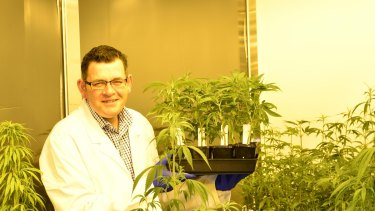 Premier Daniel Andrews casts his eye over the state's clandestine cannabis crop