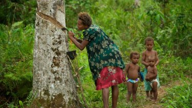 Above, from left: Madeline Paa harvests rubber on her land near Kiunga.
