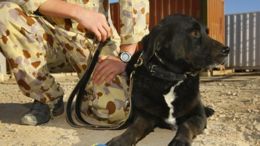 So where was Sabi the wonder dog all this time? Can't say, says the defence force. Hmm ... can't or won't?