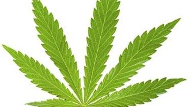 Cannabis, Leaf, Marijuana Plant, Narcotic, Medicine, Green, Nature, Flora, Addiction, Hemp.   Pic Istock. 100201.
