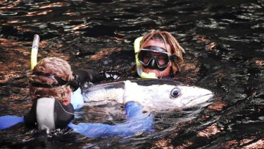Clean Seas Tuna says it can control pesky seals without harming them.