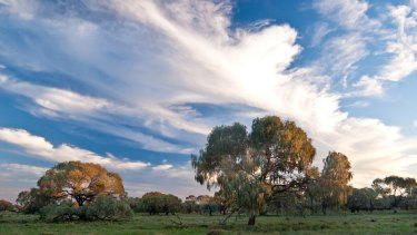 Farmers have been cutting down paddock trees at an increasing rate.
