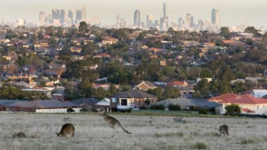 Pushing the city's limits: kangaroos graze at Attwood in Melbournes northern suburbs.