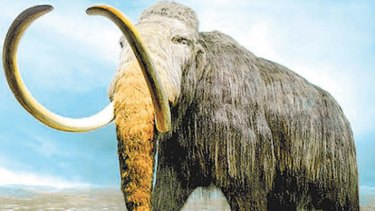 Wooly mammoth: it could be cloned.