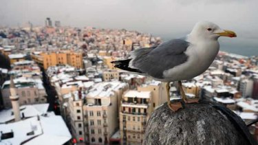 A seagull rests with snow-covered roofs in the background in Istanbul, Turkey.
