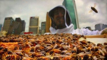 Mat Lumalasi tends to a city hive.
