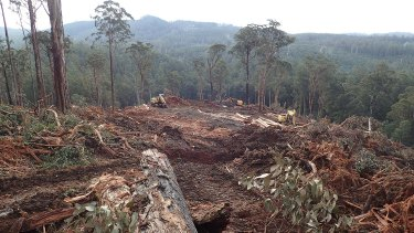 A VicForests logging coupe in the the Loch Valley, a known habitat of the threatened Greater Glider.