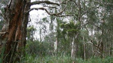 Going, going ... West Yamba wetlands under threat.
