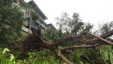 Fallen trees in Airlie Beach.
