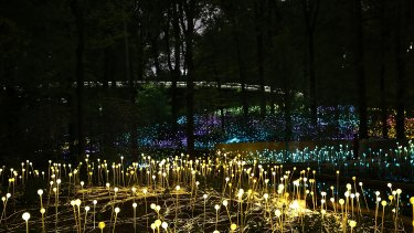 The lights will create an immersive landscape.