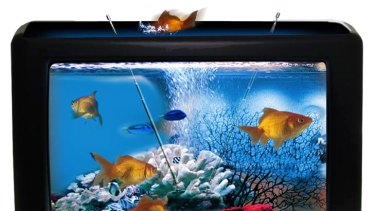 Surfing the tides of change ... you could turn your old TV into an aquarium.