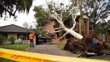 A man from a tree lopping business assesses the fallen tree that has damaged the Bankstown house.