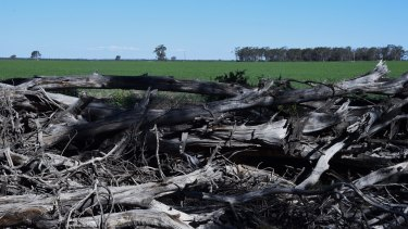 Cleared trees and crops near Croppa Creek.