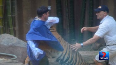 The tiger launches itself at its handler in front of terrified onlookers at Australia Zoo.