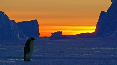 More protection sought: A king penguin during sunset at its Auster rookery near the Australian research station of Mawson.
