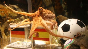 Paul the octopus decided in favour of Spain.
