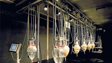 Wim Delvoye's <i>Cloaca</i> installation at MONA.