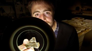 Discovered … Museum Victoria palaeontologist Erich Fitzgerald examines the bone of a new species of Australian dinosaur.
