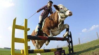 Resourceful ... Regina Mayer rides her cow Luna.