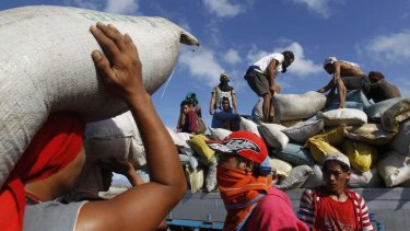 Vital supplies: A truck in Tacloban is loaded with sacks of rice from a destroyed warehouse.