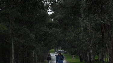 A man walks in the rain under an umbrella in Parramatta Park, Parramatta, NSW. 7th August, 2020. Photo: Kate Geraghty/SMH.