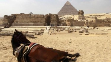 A horse rests near the pyramids in Giza:  Animal rights groups are feeding starving animals that used to pull tourists in carriages around the site.