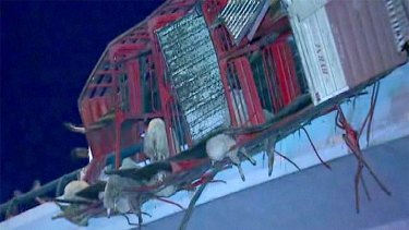 The crashed truck hangs from the overpass, sheep caught in the wreckage.