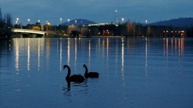 Swans enjoy the evening solitude on Lake Burley Griffin.